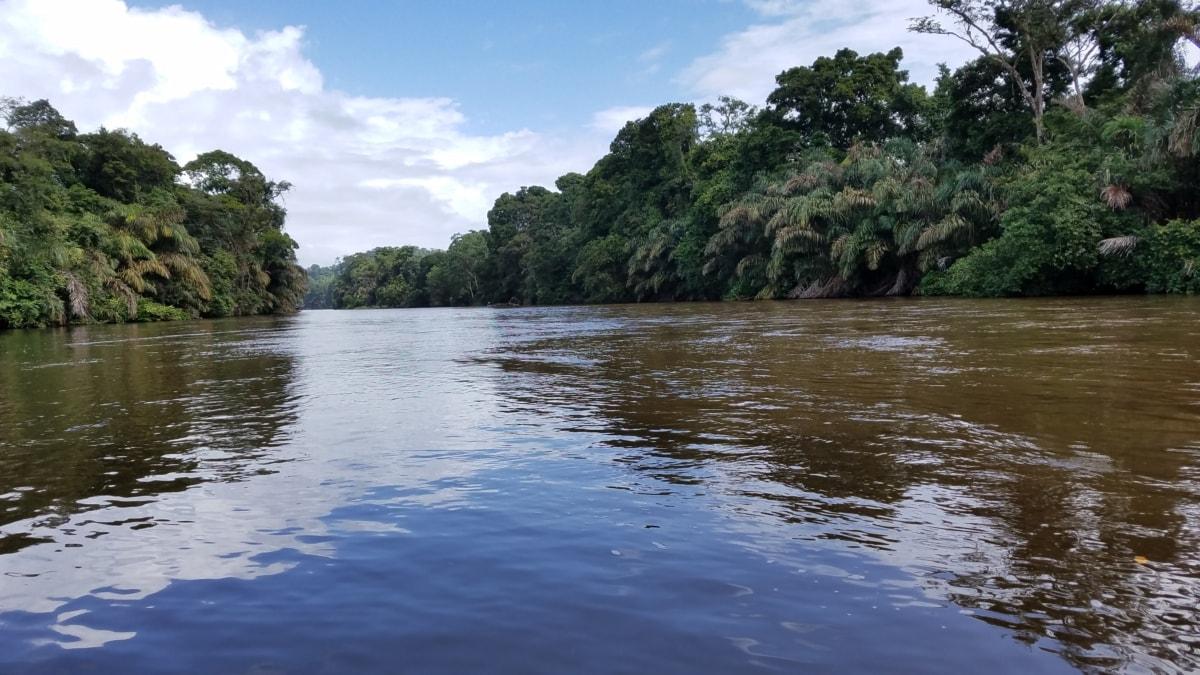 flood, rainforest, river, tropical, landscape, shore, water, tree, lakeside, forest