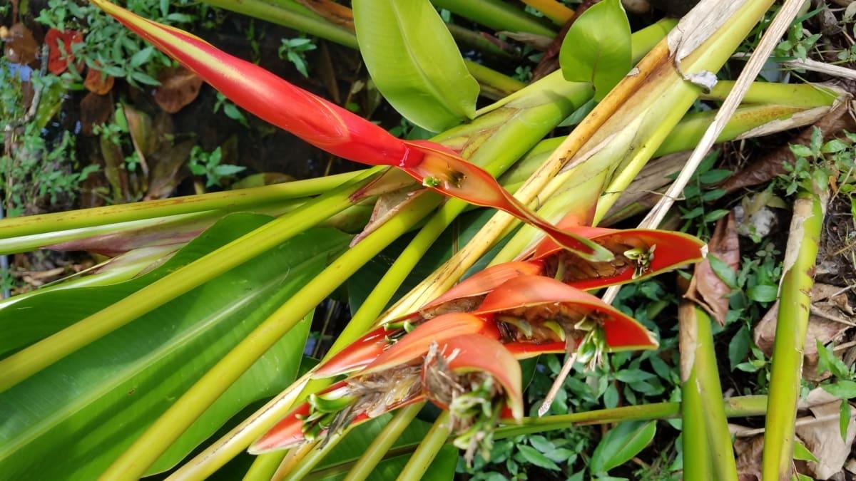 flower, rainforest, reddish, tropical, flora, tree, nature, leaf, garden, plant
