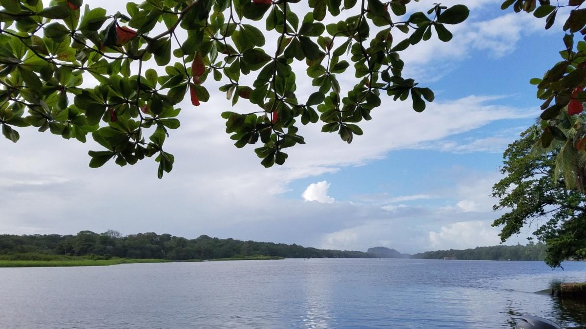 vatten, träd, sjön, naturen, landskap, sommar, blad, floden, Utomhus, miljö