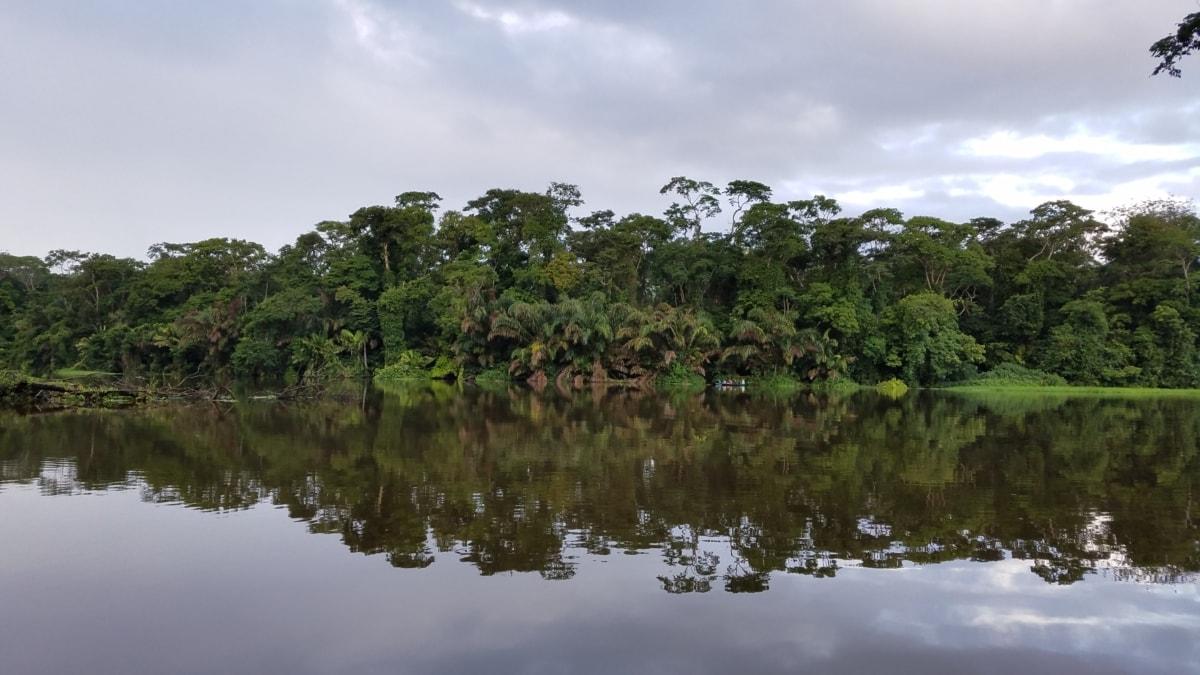 rainforest, reflection, riverbank, water, tree, nature, landscape, plant, tropical, river