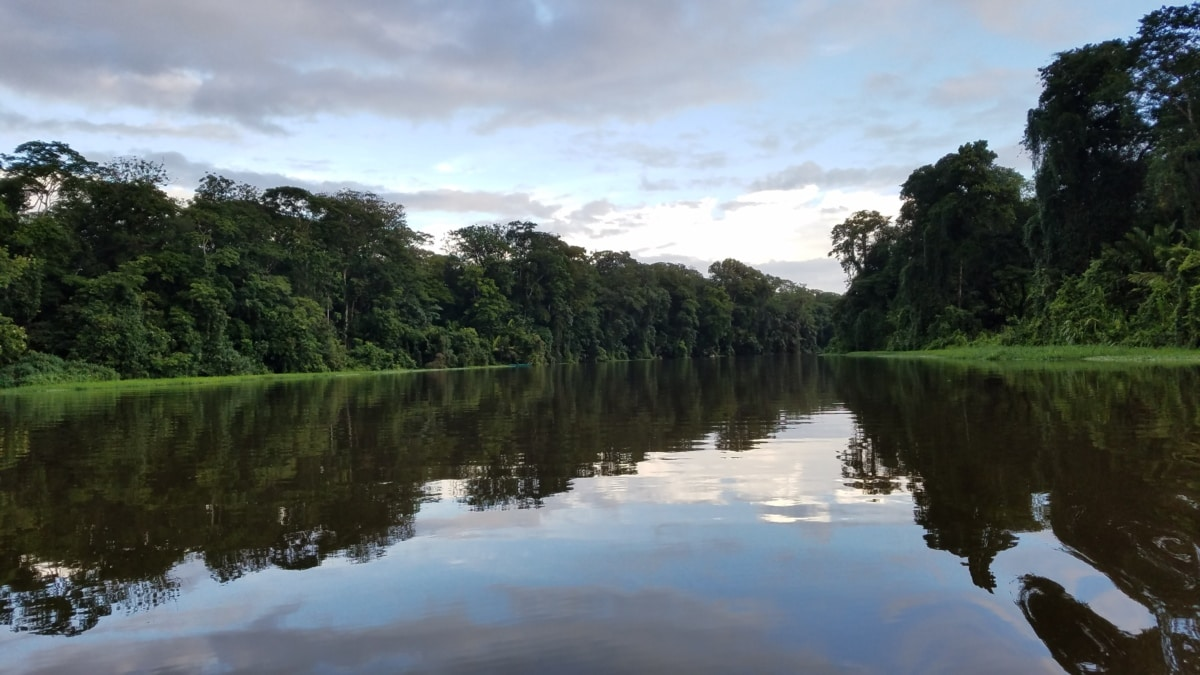 kanal, kiša šuma, rijeka, tropsko, šuma, obala, voda, krajolik, priroda, močvara