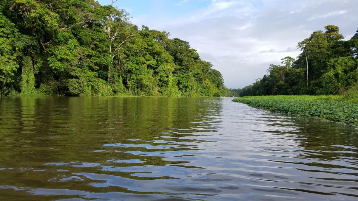 езеро, летен сезон, Слънчев, блатото, пустинята, пейзаж, вода, дърво, канал, природата