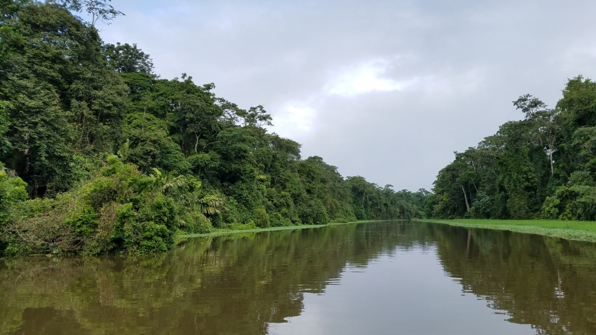 river, channel, nature, tree, water, landscape, wood, tropical, outdoors, rainforest