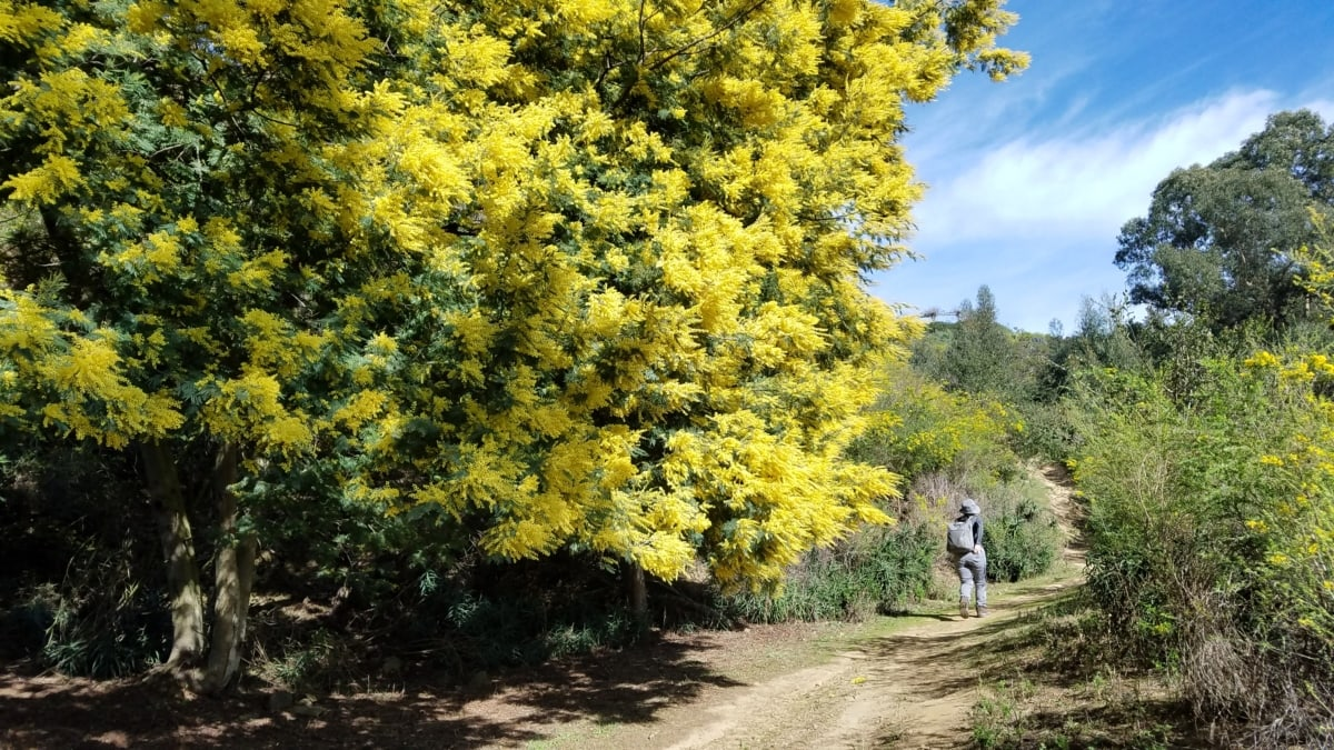 hiker, mountain climber, tree, forest, autumn, landscape, leaf, nature, flower, park