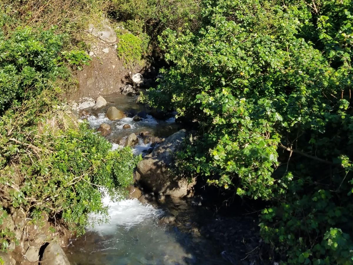 河岸, 流, 性质, 河, 叶, 水, 森林, 树, 景观, 植物区系