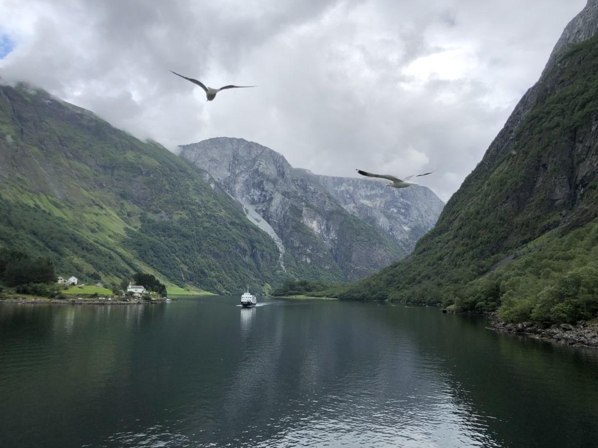 ล่องเรือ, หมอก, เลคไซด์, นกนางนวล, วัลเลย์, ภูมิทัศน์, อ่างล้างหน้า, น้ำ, ภูเขา, ธรรมชาติ