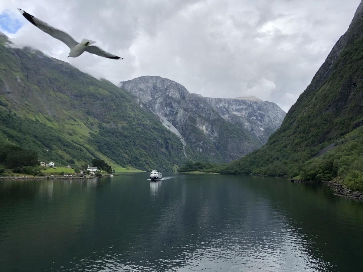 птица, плаващи, реката, Чайка, кораб, долината, природата, Lakeside, планини, вода