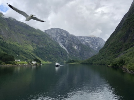 bird, flying, riverbank, seagull, ship, valley, nature, lakeside, mountains, water