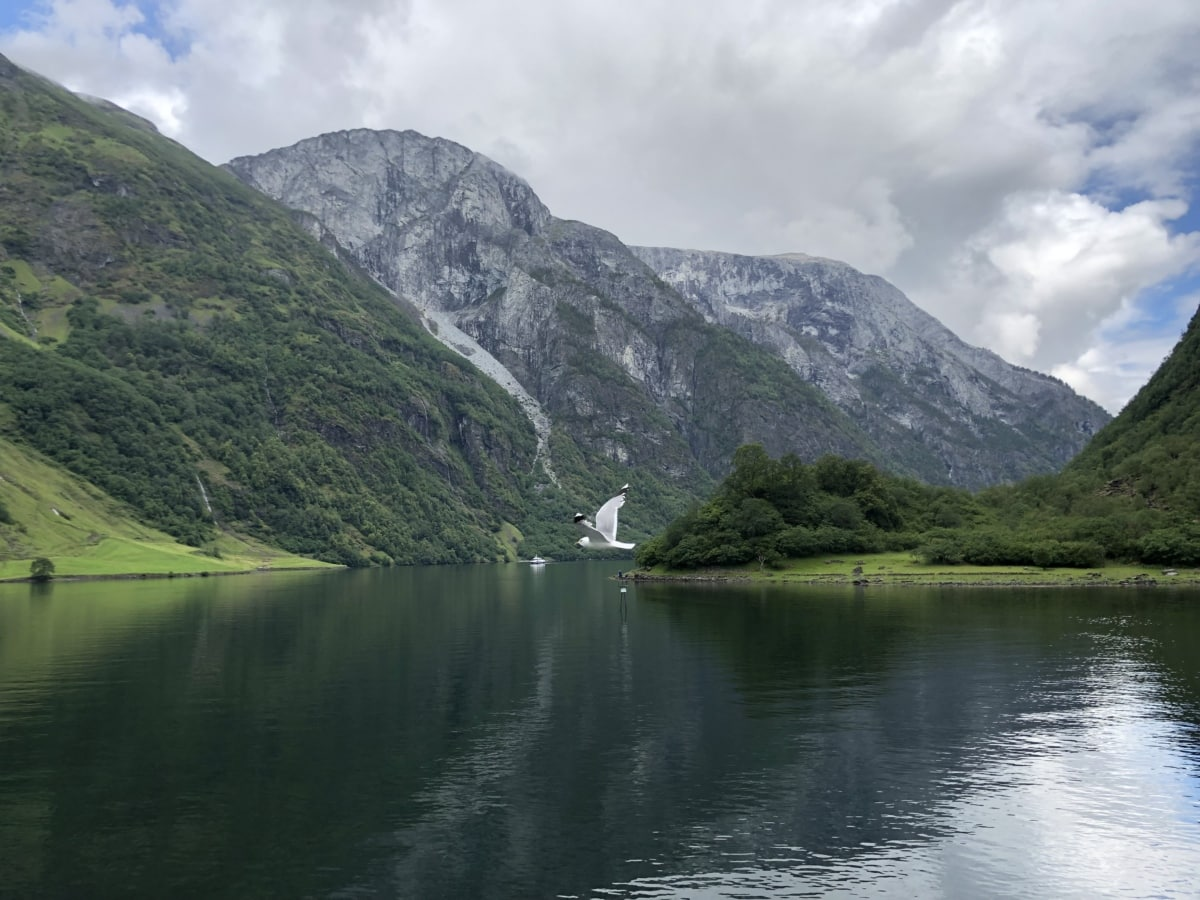 national park, river, seagull, mountain, range, mountains, water, landscape, nature, valley