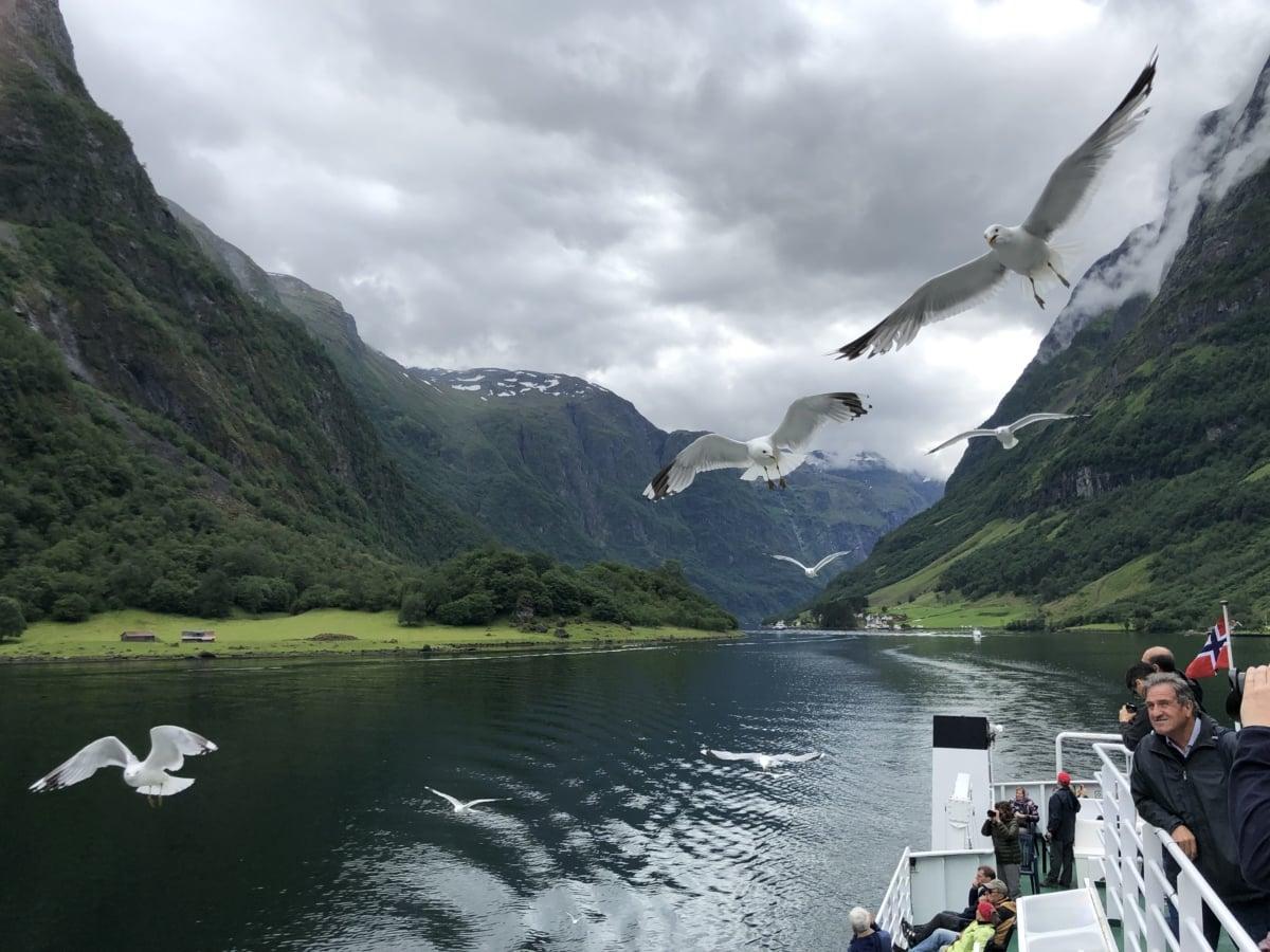 birds, cruise ship, cruiser, flyover, seagulls, basin, lake, landscape, water, mountain