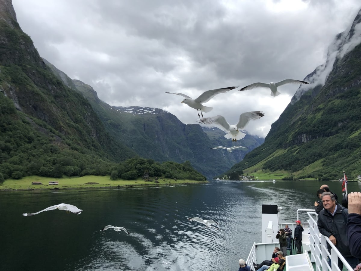 ornithologues, oiseaux, foule, mouettes, navire, eau, paysage, Lac, montagne, nature