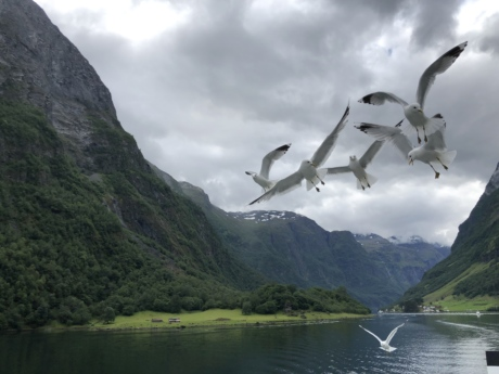 animals, flying, flyover, lakeside, seagulls, basin, landscape, range, mountain, mountains