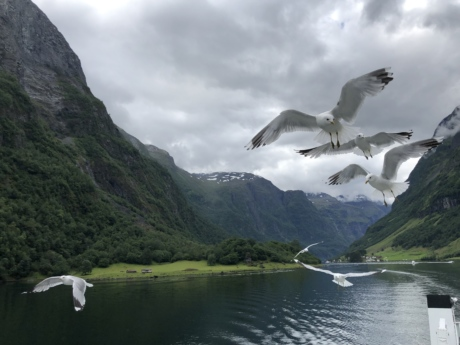 bird family, bird watcher, flying, flyover, seagulls, glacier, landscape, lake, mountains, mountain