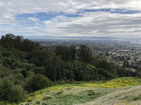 hillside, hilltop, panorama, town, forest, landscape, tree, mountain, nature, hill