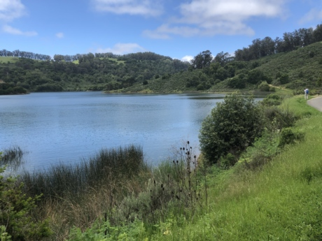 water, landscape, shore, lakeside, lake, river, forest, nature, tree, grass