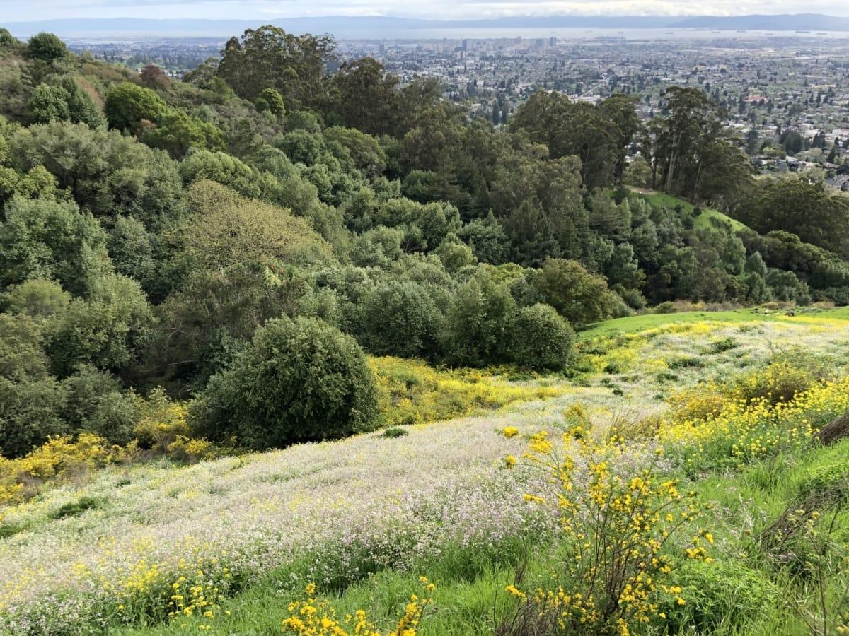 hilltop, panoramic, shrub, plant, landscape, nature, flower, tree, mountain, hill
