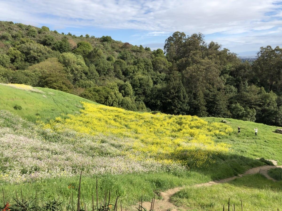 Денне світло, поле, пагорби, краєвид, люди, завод, дерево, рослина, квітка, природа