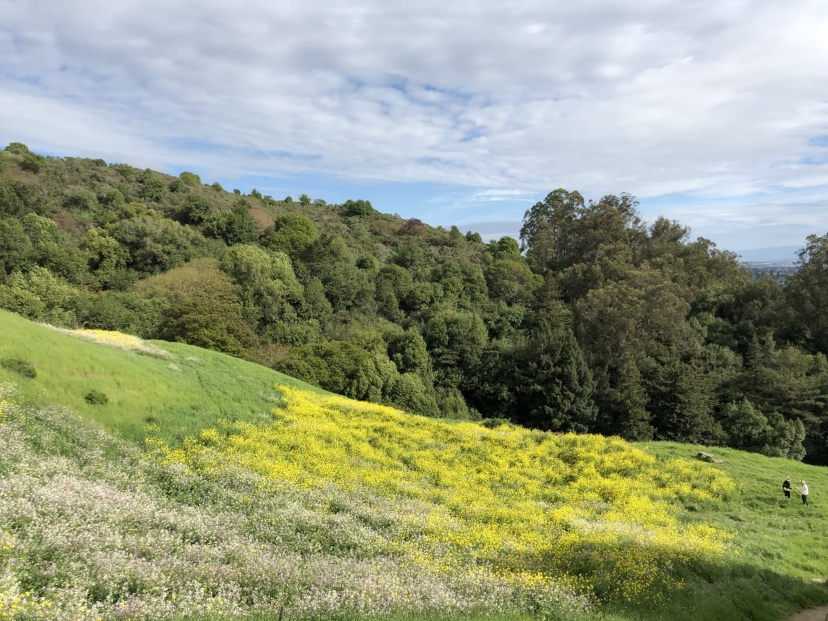 чагарник, поле, сільських, завод, краєвид, трава, природа, квітка, дерево, Хілл