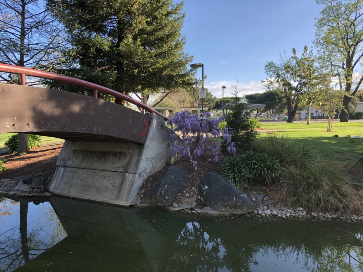 street, urban area, structure, fountain, water, bridge, river, tree, nature, pool