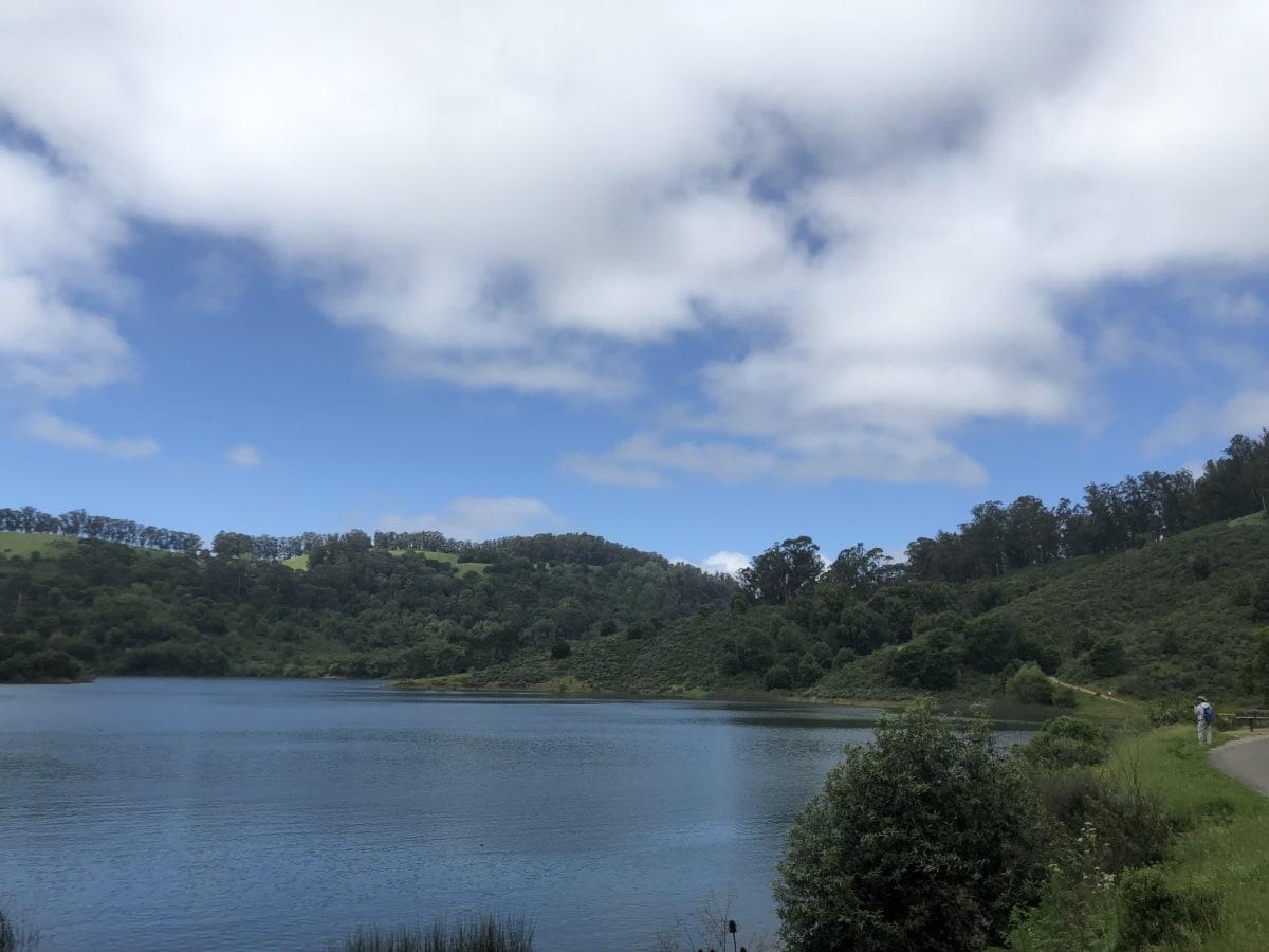 fair weather, lakeside, shoreline, spring time, trees, lake, water, shore, nature, landscape