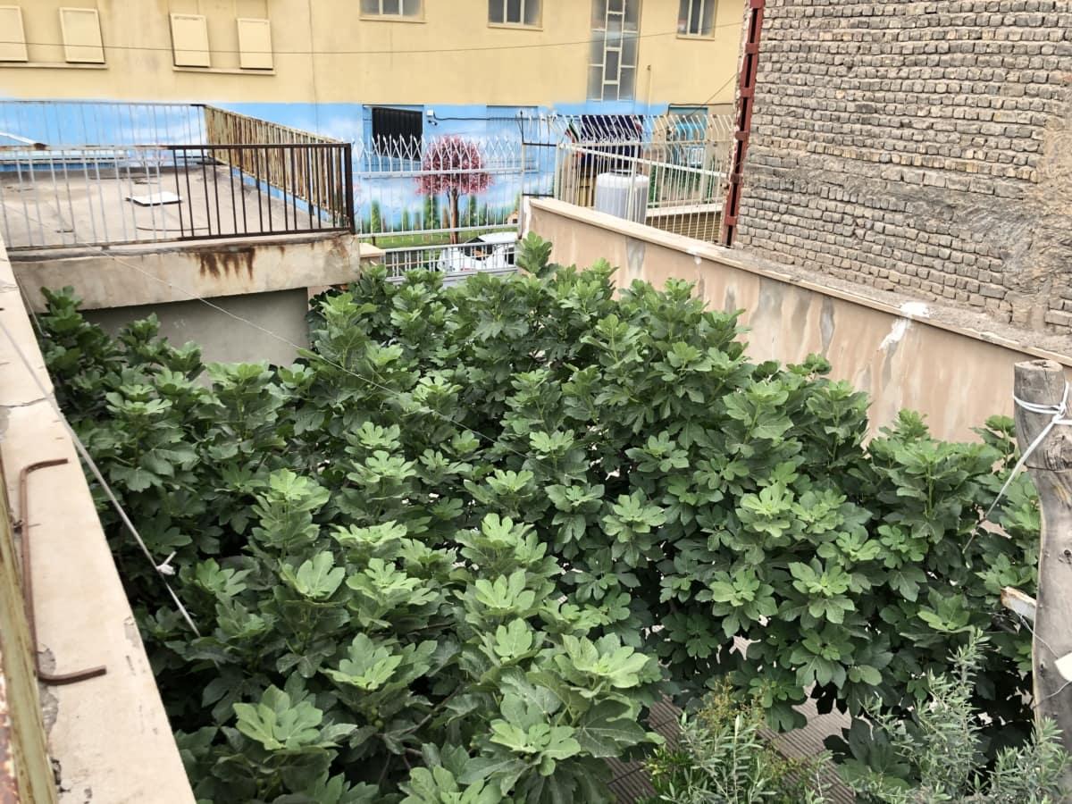 Kostenlose Bild Hinterhof Balkon Gebaude Struktur