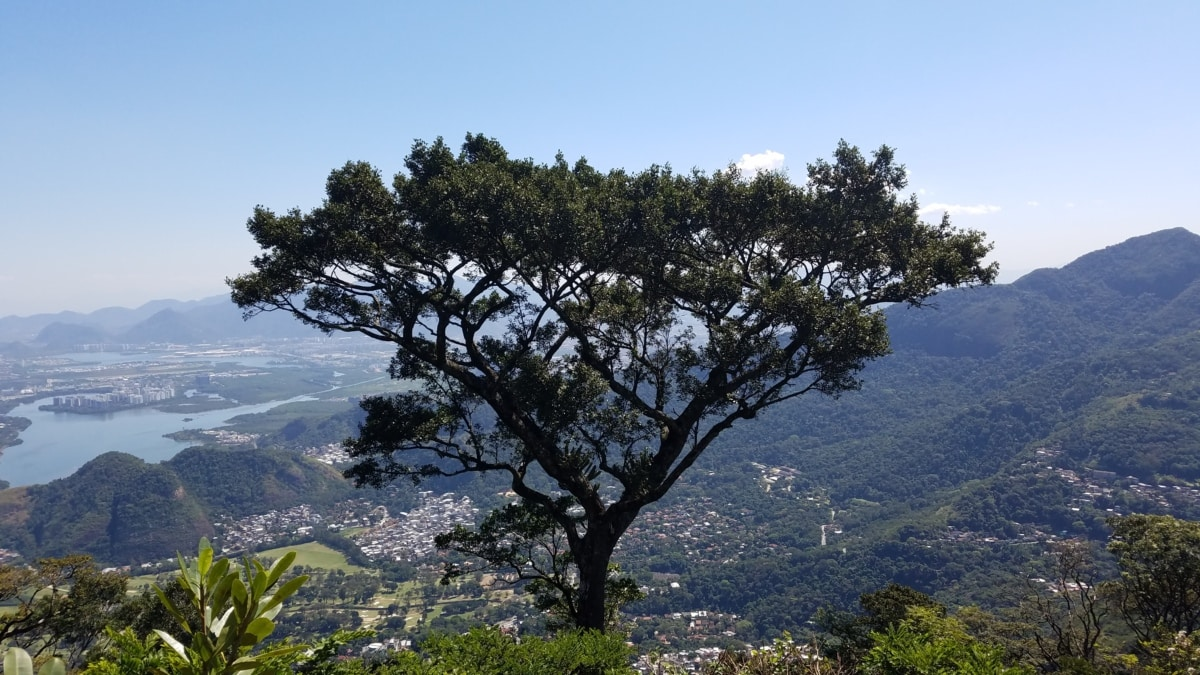 high land, panorama, tree, nature, landscape, wood, mountain, summer, hill, sight