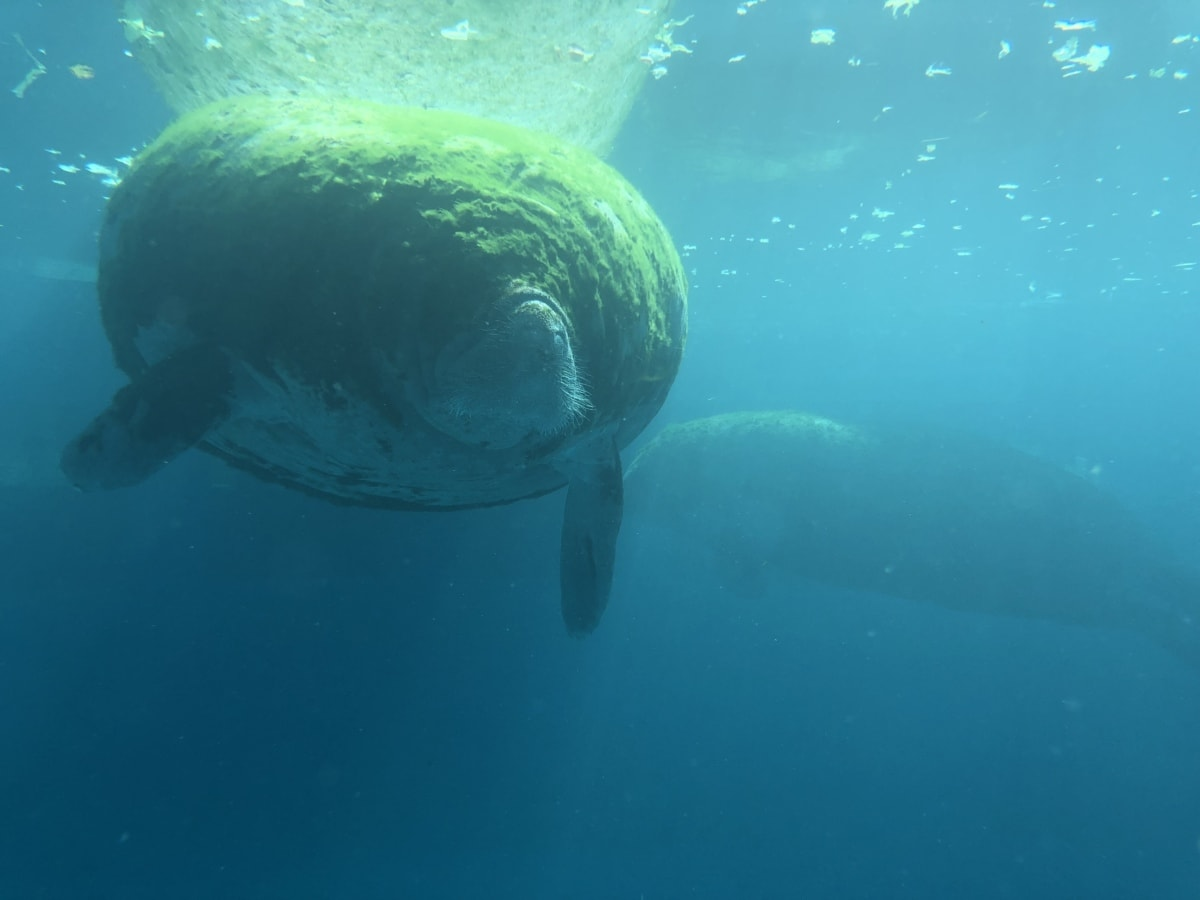 animal, underwater, swimming, marine, fish, sea, ocean, water, diving, nature