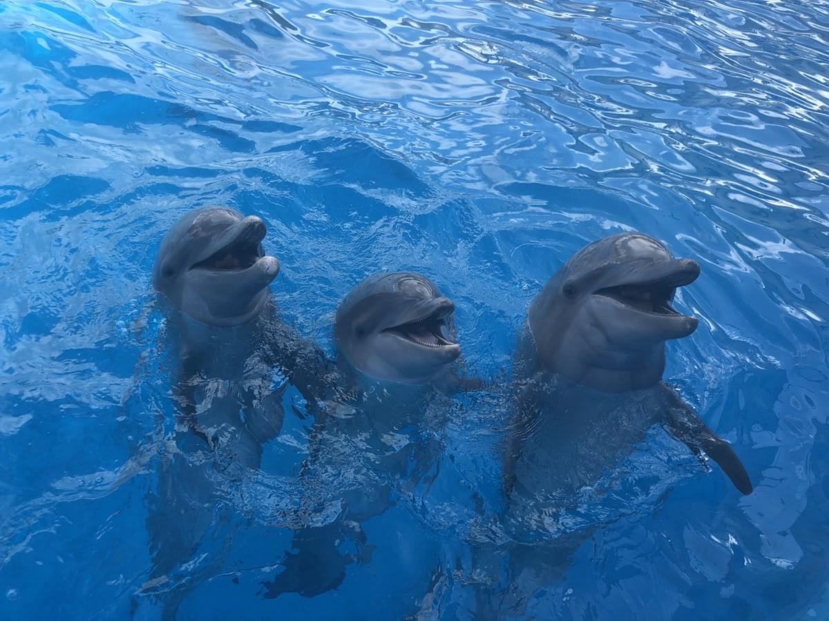 animaux, belle photo, Dauphin, océan, Portrait, eau salée, piscine, eau, sous l'eau, mer