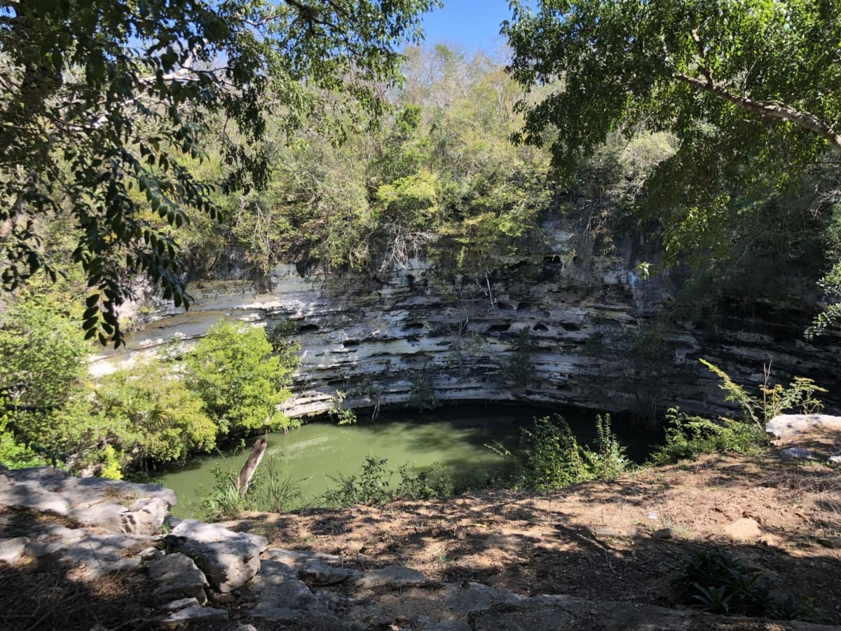 drvo, priroda, drvo, šuma, krajolik, voda, list, park, rijeka, na otvorenom
