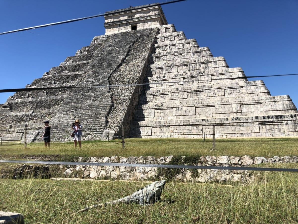 plantas da grama, lagarto, pirâmide, Turismo, Turismo, pedra, arquitetura, cobrindo, antiga, parede