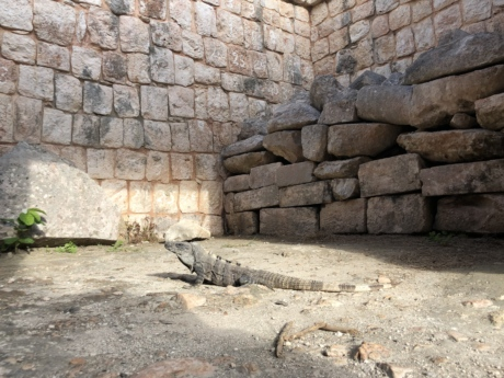 lizard, stone wall, rough, architecture, texture, brick, surface, old, stone, wall