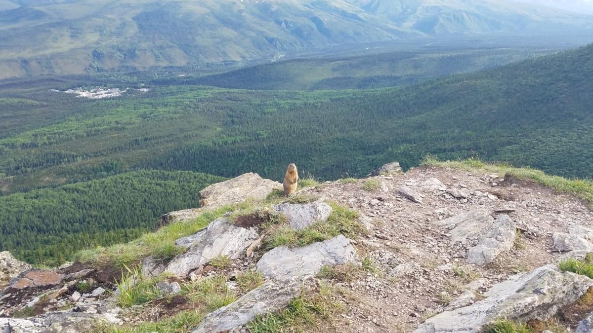 landschap, natuur, knaagdier, marmot, berg, rots, vallei, heuvel, spoor, buitenshuis