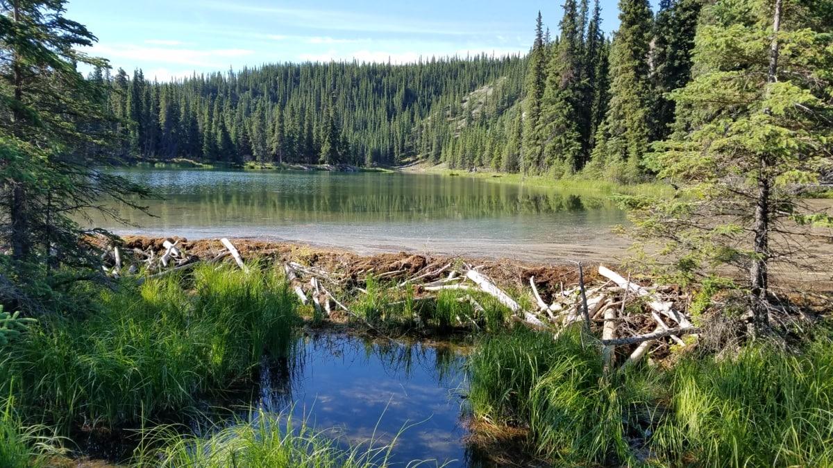 podmokłych, gruntów, Bagno, krajobraz, wody, Jezioro, Natura, Rzeka, drewno, odbicie