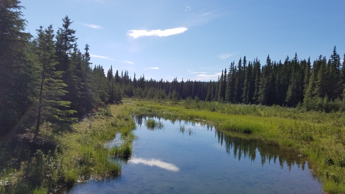forest, swamp, wood, water, tree, nature, landscape, lake, outdoors, reflection