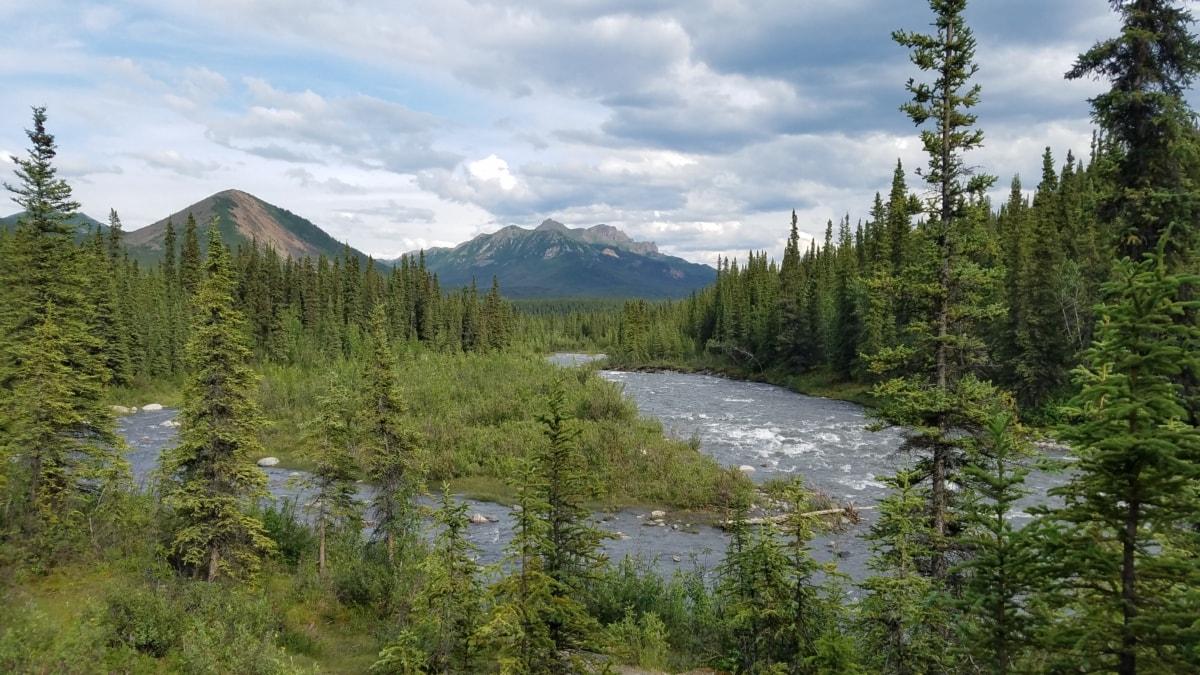 albero, gamma, natura, acqua, legno, orizzontale, foresta, montagna, tempo libero, estate