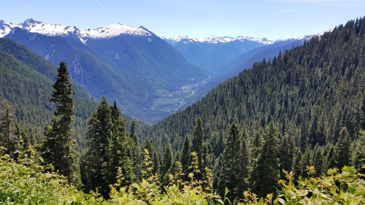 Vacker, barrträd, skogen, nationalparken, dalen, vit-gran, trä, landskap, Berg, utbud