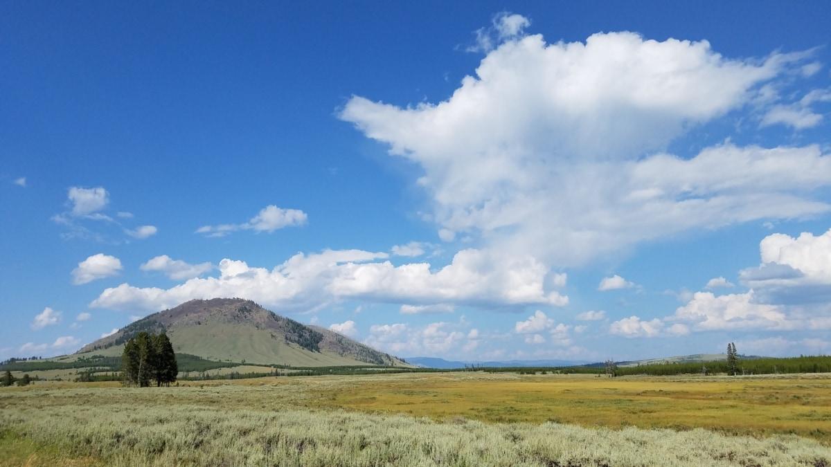običan, krajolik, polje, trava, ruralni, priroda, stepa, na otvorenom, zelenilo, ljeto