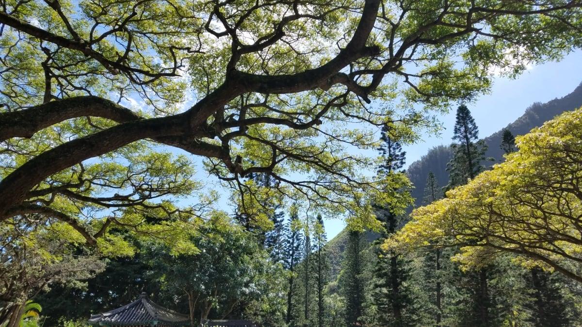 grene, nationalpark, skygge, solskin, træer, træ, træ, efterår, natur, landskab
