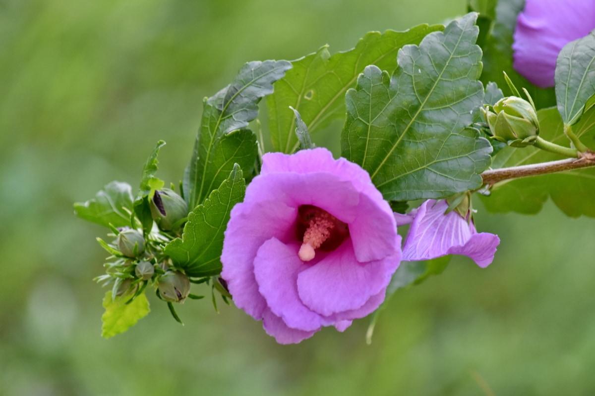 wilderness, wildflower, summer, nature, shrub, plant, leaf, flower, garden, outdoors