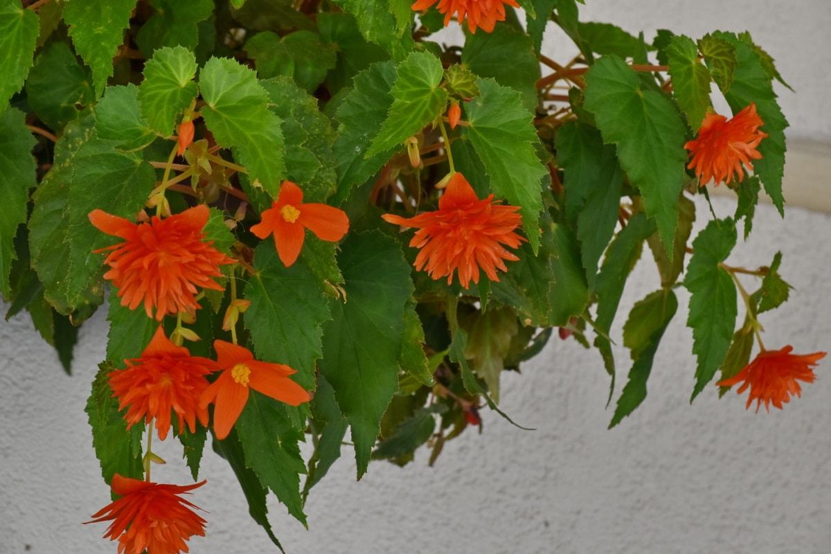 กระถางดอกไม้, โรงงาน, ใบ, ดอกไม้, สมุนไพร, ใบไม้, ธรรมชาติ, ฟลอรา, ฤดูร้อน, สดใส