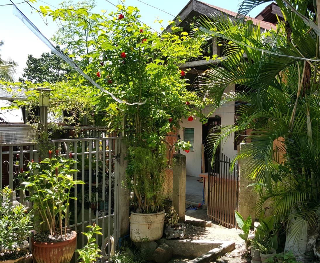 bakgården, gjerdet, huset, palm, forstad, bygge, struktur, hage, blomst, tunet