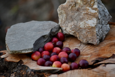 big rocks, fruit, still life, tree, food, wood, nature, rock, leaf, delicious