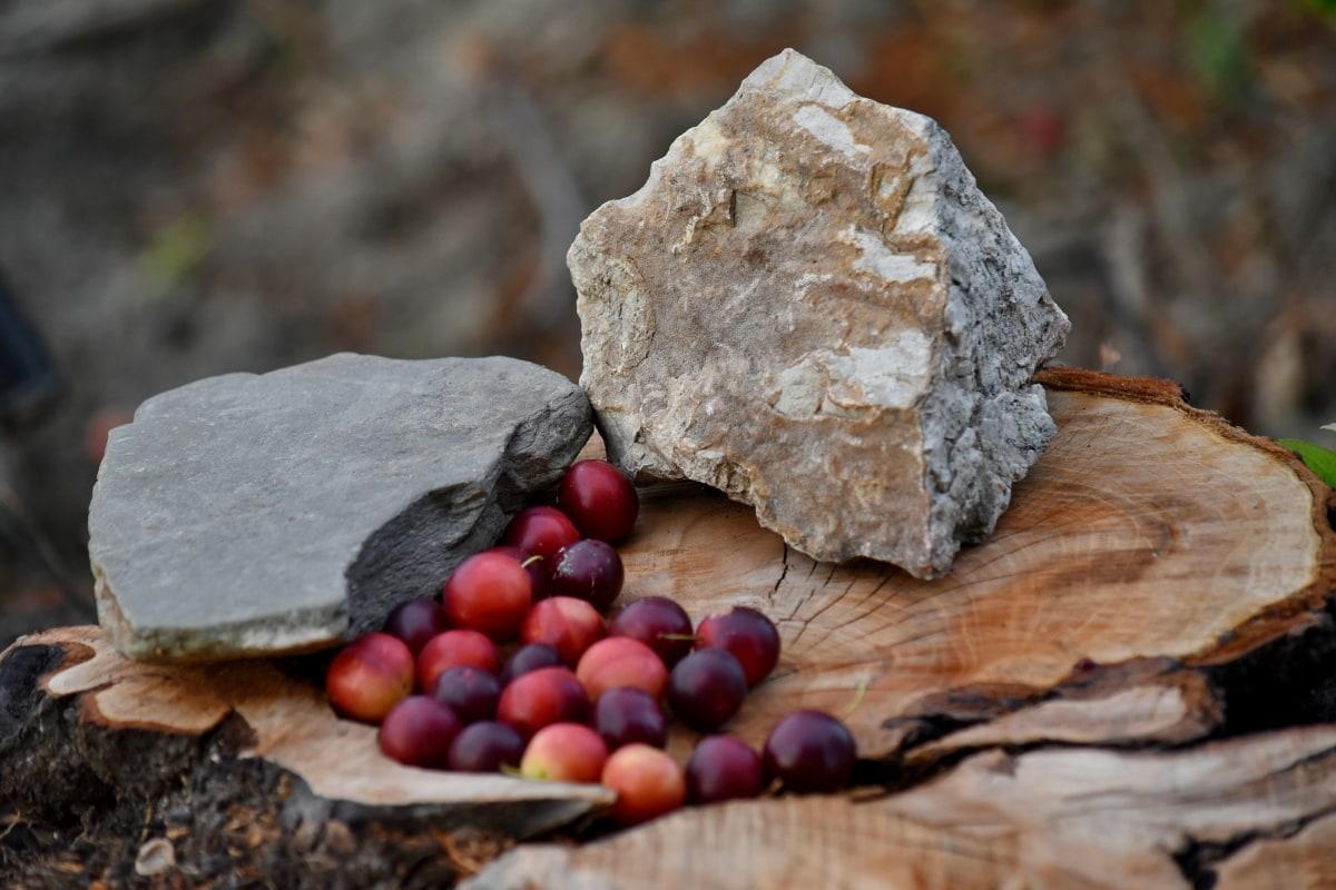 과일, 음식, 자연, 나무, 바위, 돌, 야외에서, 잎, 재료, 건조