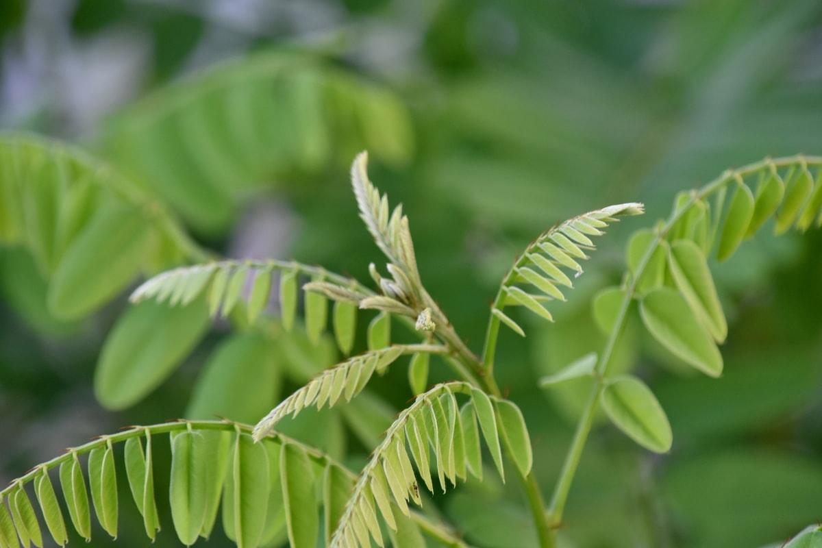 feuilles vertes, arbre, flore, Forest, plante, nature, feuille, feuilles, été, fermer
