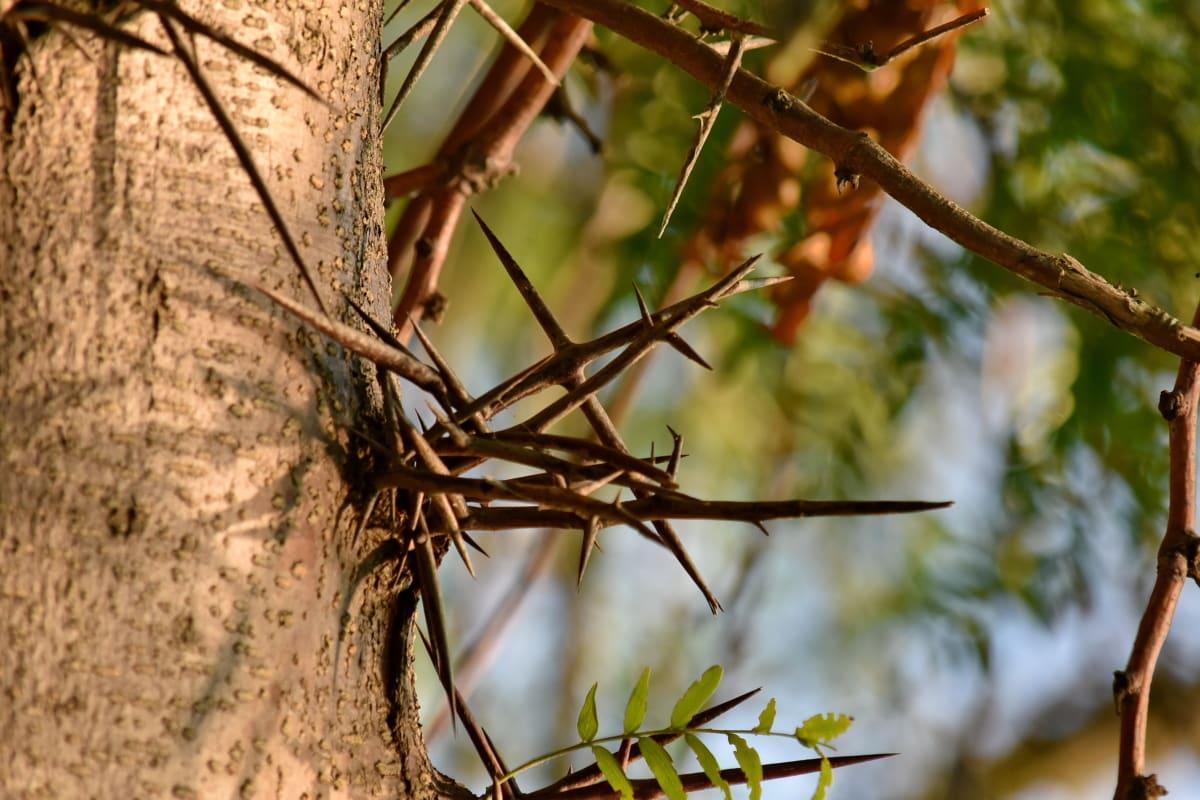 écorce, tranchant, arbres, nature, branche, arbre, bois, à l'extérieur, Couleur, été