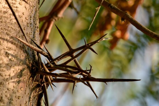 detail, sharp, tree, branch, nature, leaf, outdoors, color, wood, garden