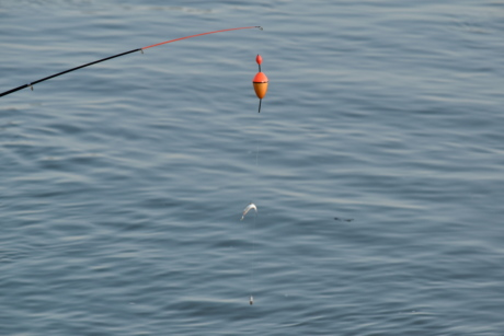 fishing gear, water, ocean, sea, lake, bait, nature, sport, summer, reflection