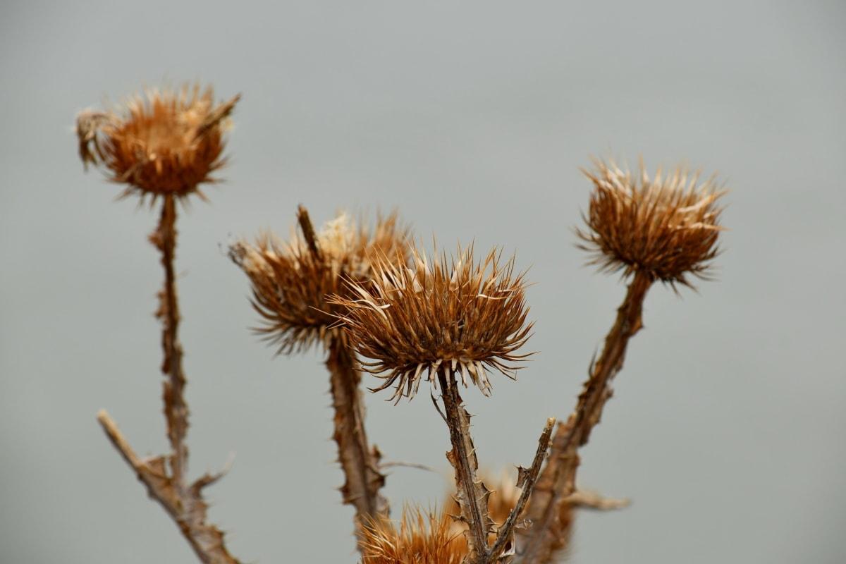 roślina, zioło, Natura, ostry, na zewnątrz, Latem, kwiat, liść, dziki, flora
