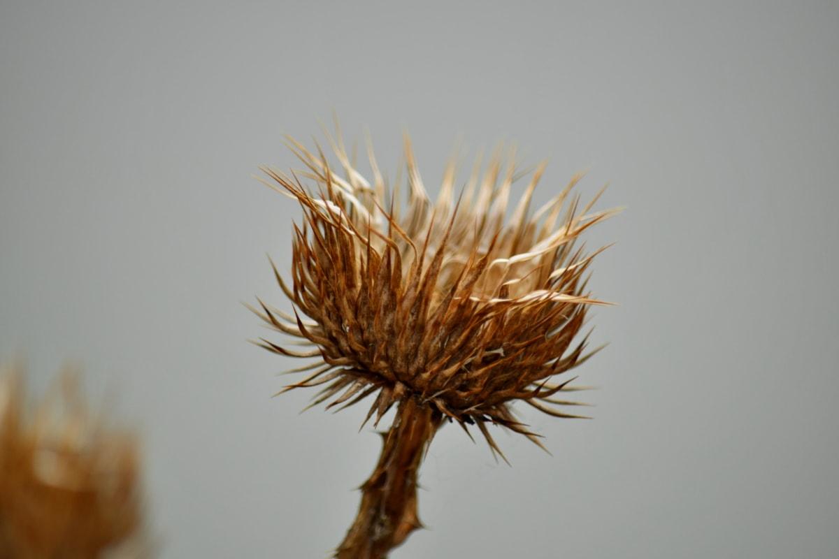 природата, растителна, остър, цвете, лято, на открито, флора, биология, мъгла, билка