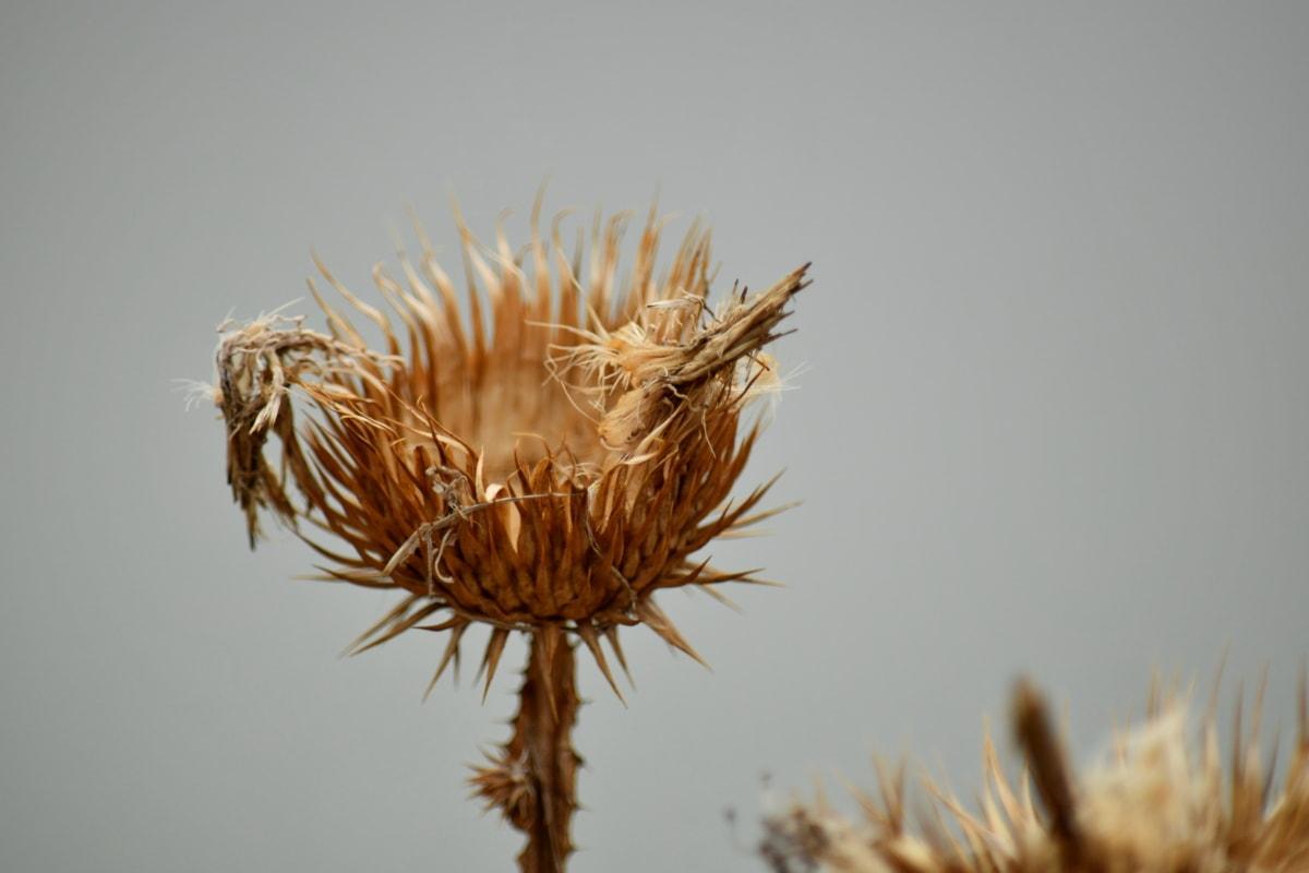 plant, natuur, scherp, zomer, bloem, buitenshuis, Stilleven, biologie, wild, natuurlijke